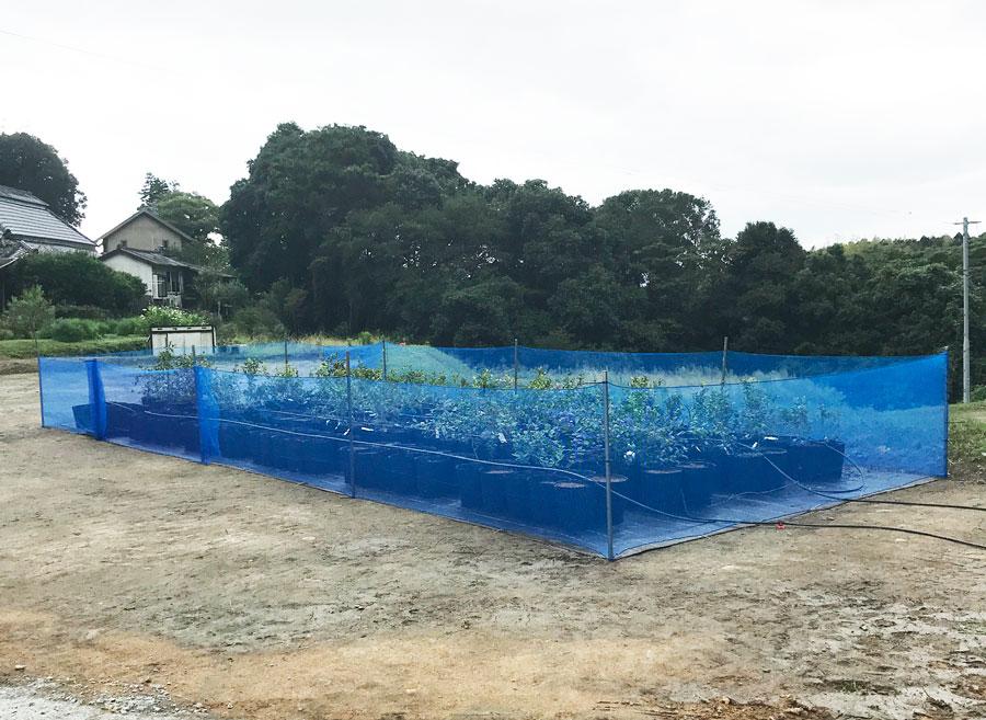 かみちゃん農園