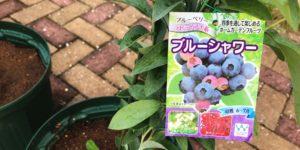 ブルーベリー品種|ブルーシャワー|ラビットアイ系