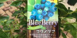 ブルーベリー品種|マグノリア|サザンハイブッシュ系