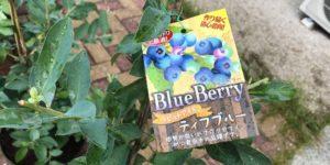 ブルーベリー品種 ティフブルー ラビットアイ系