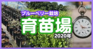 ブルーベリー養液栽培の育苗場を紹介します【2020年版】