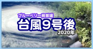 【ブルーベリー育苗場】2020年9月2日の台風9号後の状況