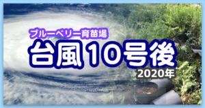 【ブルーベリー育苗場】福岡県の台風10号通過後の悲劇:2020年9月7日
