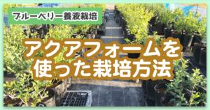 アクアフォームをブルーベリー養液栽培で使う理由について