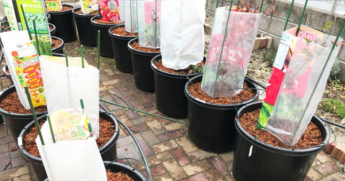 【ブルーベリー養液栽培】アクアフォームの問題点を解決する方法2つ