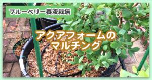 【ブルーベリー養液栽培】アクアフォームにマルチングをしました
