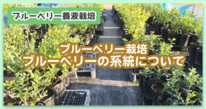 【ブルーベリー栽培】ブルーベリーの系統について
