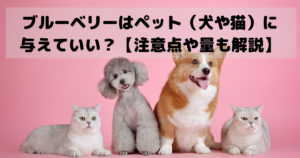 ブルーベリーはペット(犬や猫)に与えていい?【注意点や量も解説】