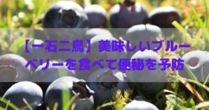 【一石二鳥】美味しいブルーベリーを食べて便秘を予防