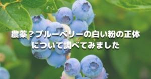 農薬?ブルーベリーの白い粉の正体にてついて調べてみました
